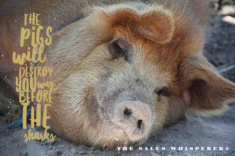 pigs_sharks_the_sales_whisperer_wes_schaeffer