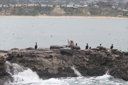 seal_rock_seals