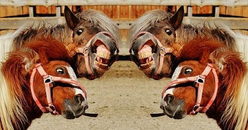 crazy_horses_crazy_speaker