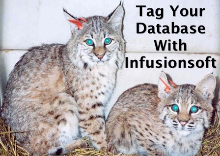 infusionsoft-services-infusionsoft-tag-bobcats.jpg