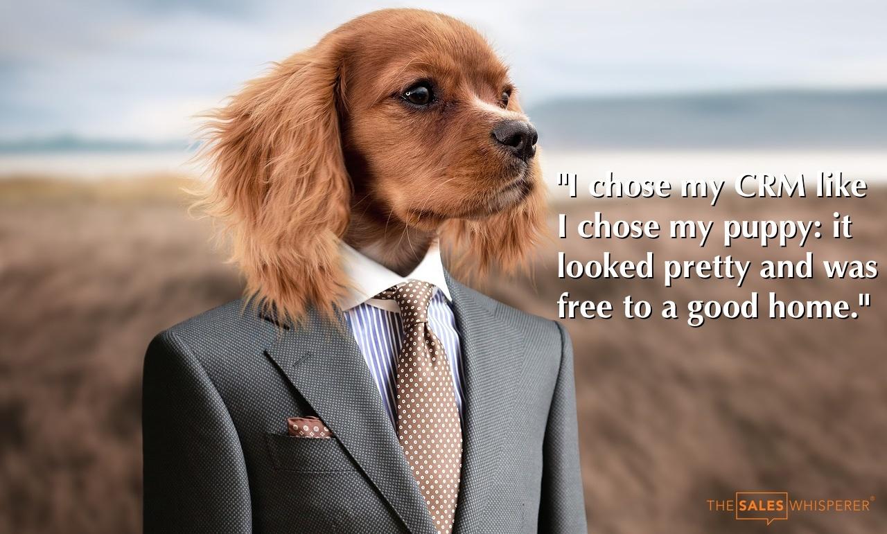 puppy_free_crm_wes_schaeffer