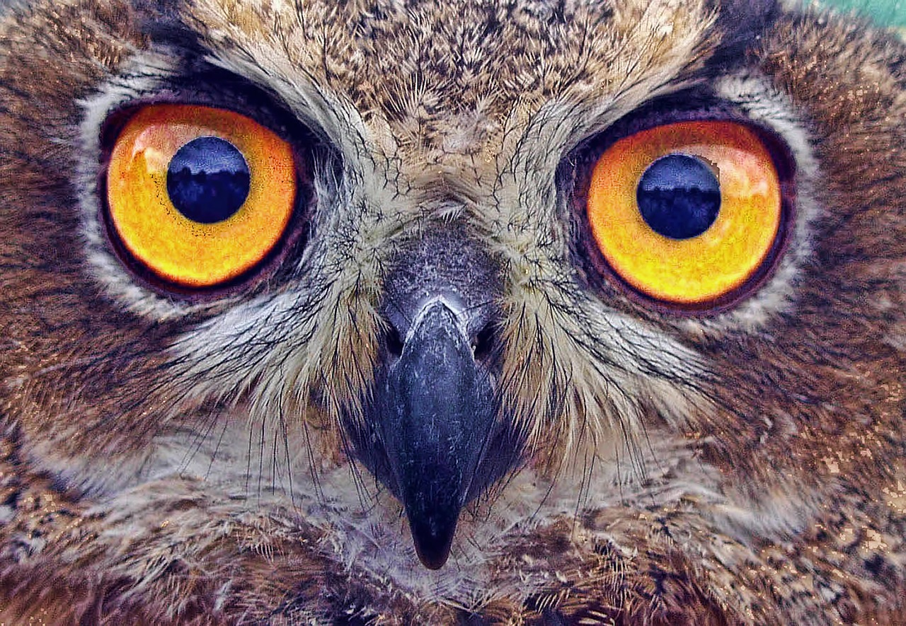 owl-see-him-wes_schaeffer_from_todays_reading